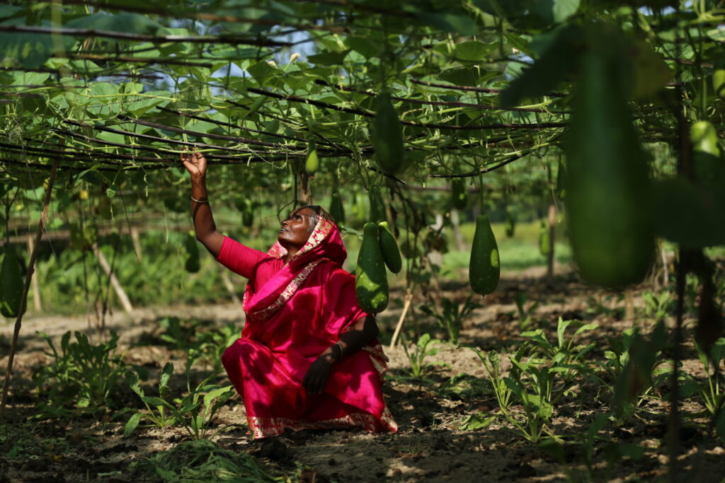 A Bangladeshi woman crouches down under the vines of her home garden.